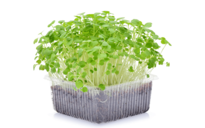 Microgreens- Easy to Grow and Why You Should
